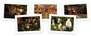 Fotos für den Lichterabend der Gärtnerei Sporkman